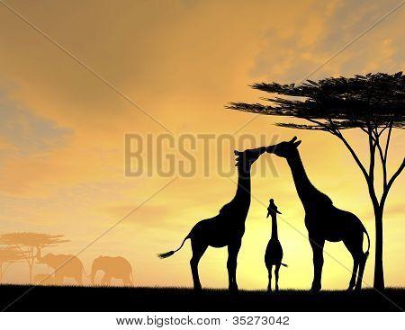Giraffe Family Love