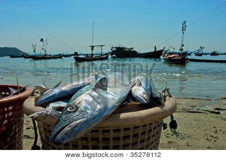 basket of fish