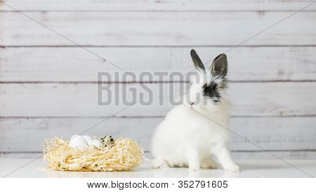 Close-up Of Cute White Bunny Is Sitting Near Straw Nest With Eggs, On Wooden Background. Concept Of