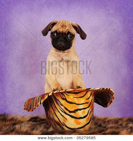 Cowboy Pug