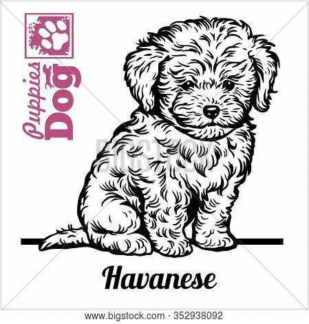 Havanese Puppy Sitting. Drawing By Hand, Sketch. Engraving Style, Black And White Vector Image.