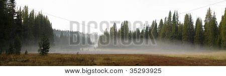 Low-hanging Fog Over A Meadow