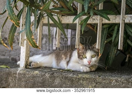 Beautiful Portrait Of A Gray Cat In The Backyard