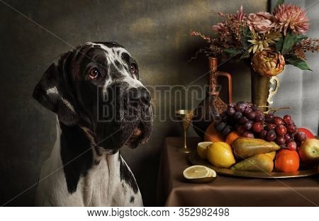 Portrait Of A Pedigree Great Dane Dog With A Still Life Of Fruit In A Studio