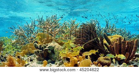 colorful tropical reef