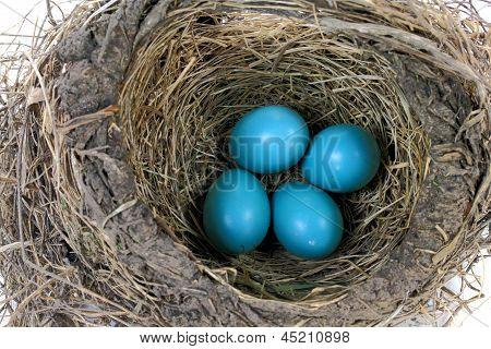 Close-up View Of Robin Bird Nest