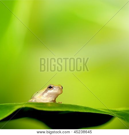 Frog stand on the green leaf