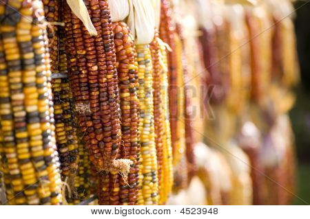 Indian Corn Perspective