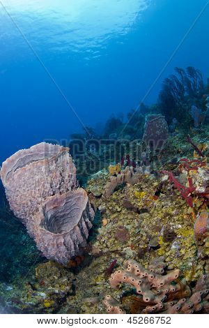Two Barrel Sponges sitting on St. Lucia Reef. poster