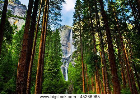 Yosemite Waterfalls behind Sequoias in Yosemite National Park,California