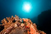 ocean coral and sun taken in the red sea. poster