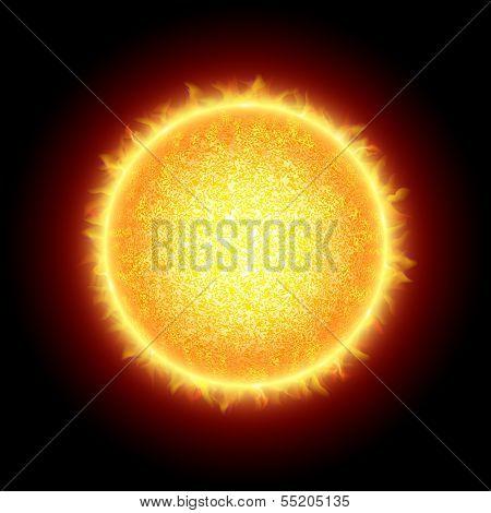 The Sun. Vector.