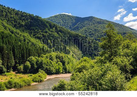 Mountain River Near Forest