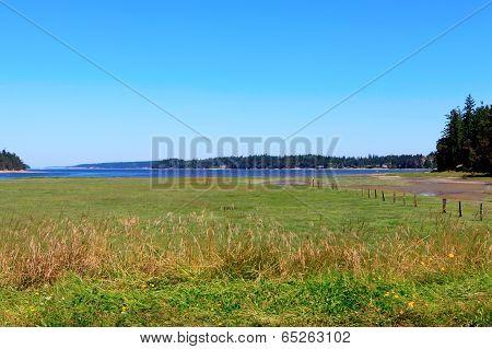 Marrowstone island. Olympic Peninsula. Washington State. Marsh land with salt water and northwest wild flowers. poster
