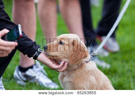 Petting A Puppy
