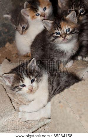 Kitten With Litter
