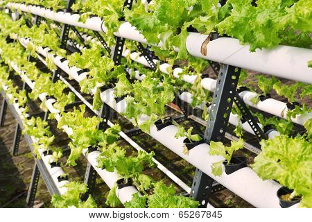 Hydroponic On Plastic Pipe