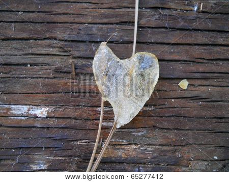 Rustic Amber Heart Wood