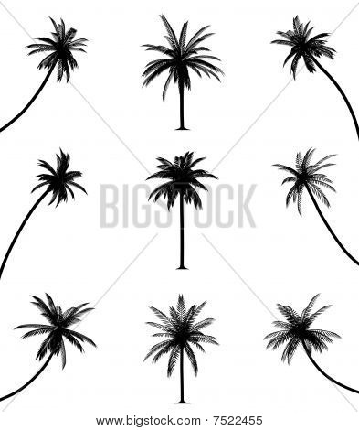 Palm trees on isolated white background. EPS file available. poster