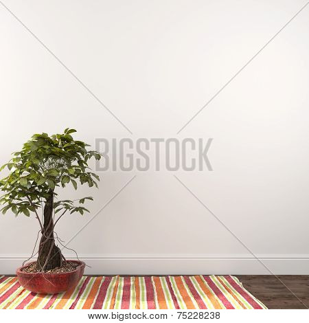 Plant On A Colored Carpet