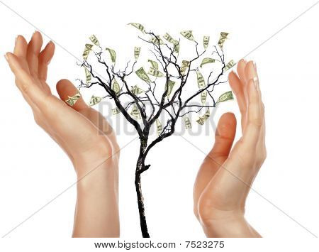 Hands And Money Tree