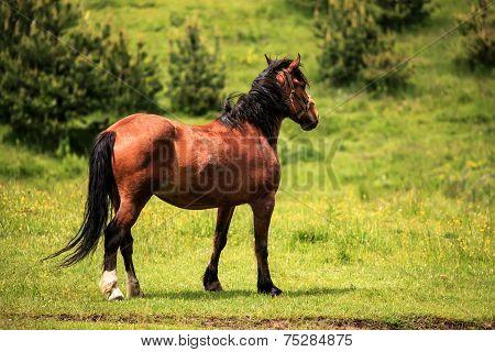 Horse On Green Meadows