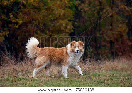 Autumn Park And Dog