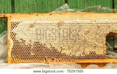 Fresh Honey In Honeycomb