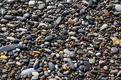 Wet different pebbles closeup on sea coast poster