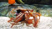Hermit Crab crawling on the ocean floor poster