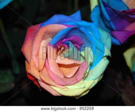 Dyed Moroccan Rose
