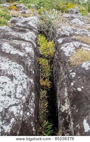 Field Of Nodulated Stone In Lan Hin Pum, Thailand