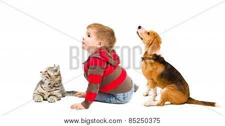 Cute boy, beagle dog and kitten