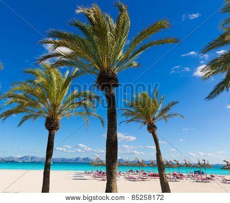Mallorca Platja de Alcudia beach in Majorca Balearic islands