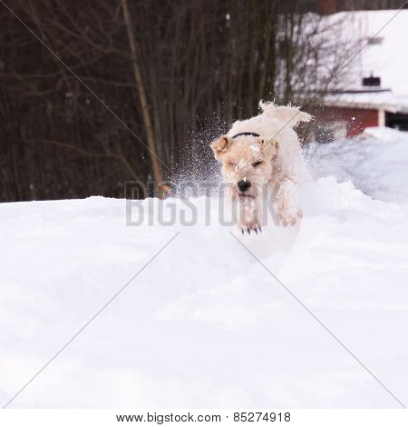 Softis_playing_in_snow