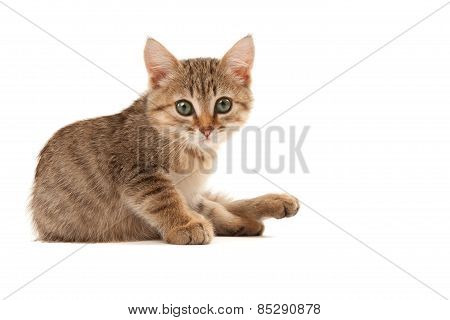 Picture Of Kitten Isolated On White