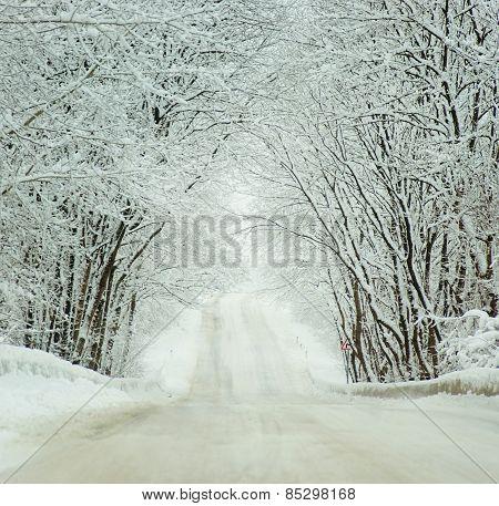 Cold Winter Landscape Of A Road