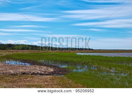 Wetland Coastline