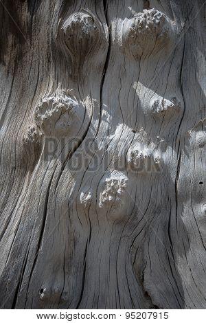 Old Stump Knotty Wood Texture