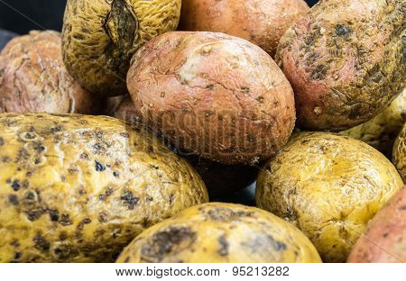 Raw potatoes on the table