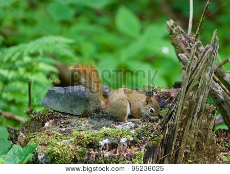 The Cutest Little Squirrel Is Sniffing Round Something On The Stub
