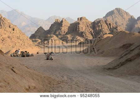 Quad trip on the desert near Sharm El Sheikh