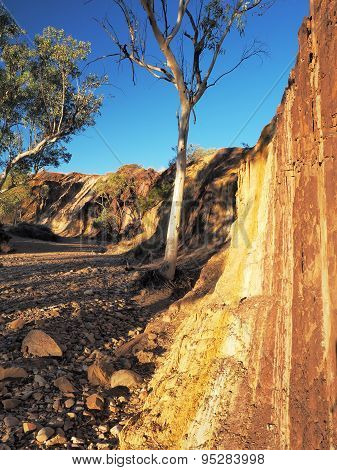 Strong upwards Ochre lines in the banks of a creek
