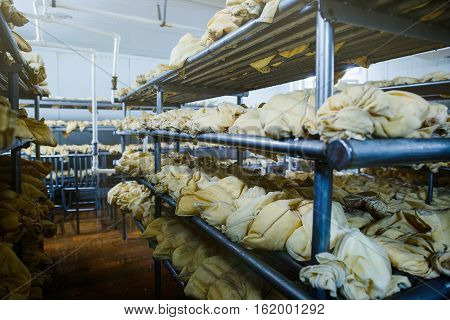 Dairy Factory Cheese