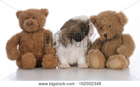 cute puppy sitting between two stuffed bears on white background