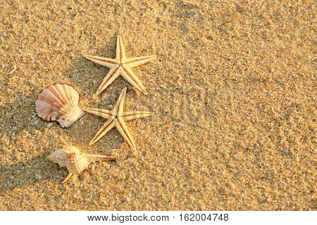 Sea shells and starfishes on sand, close up view