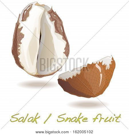 Salak / Snake fruit image isolated .