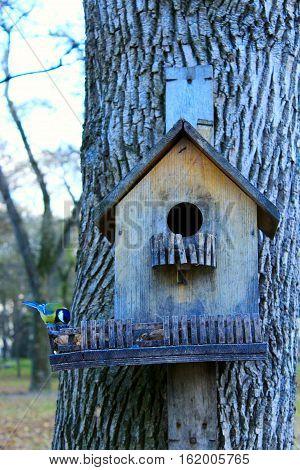 tomtit on the feeding-rack like a small house seeks the birdseed