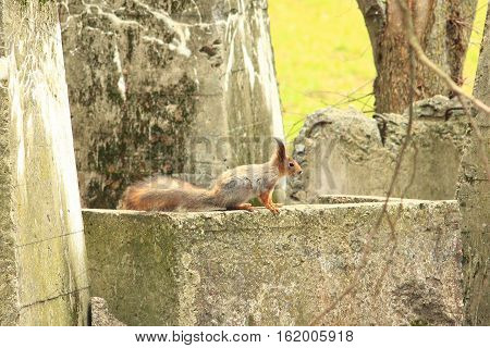 nice squirrel on the concrete slab near the park