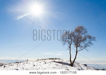 Solitaire Tree With Sun. Winter Season.